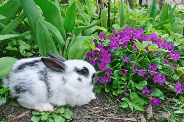 первоцветы которые не нуждаются в уходе примула