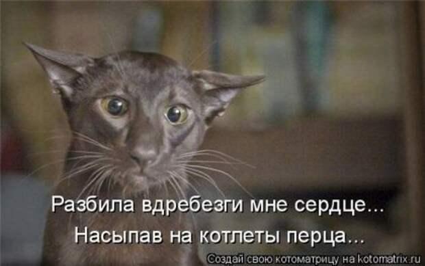 Лучшие котоматрицы недели (16 фото)
