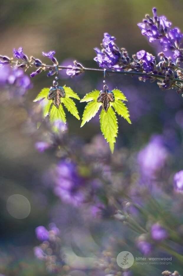 Листья хмеля