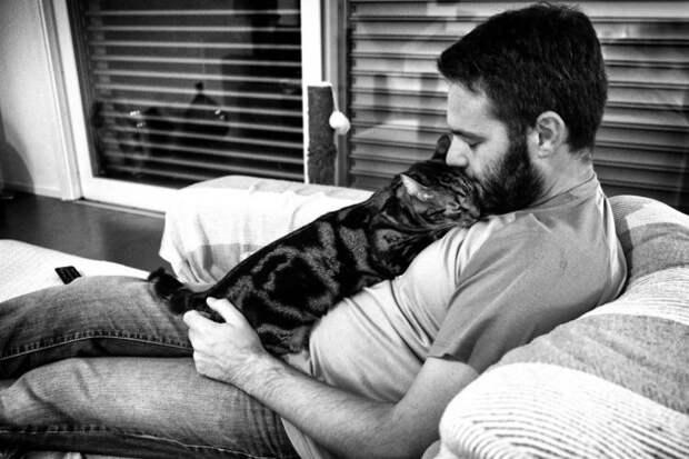 Проект «Мужчины и их кошки» Сабрины Боэм