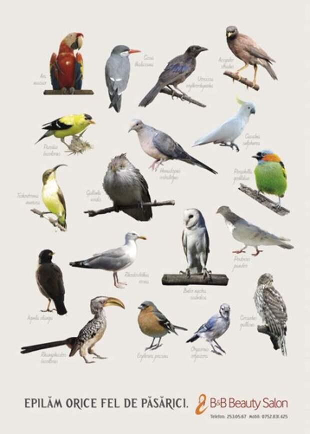Салон красоты рекламируется с помощью птиц