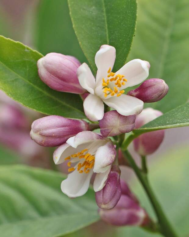 Как выглядят цветы будущей еды