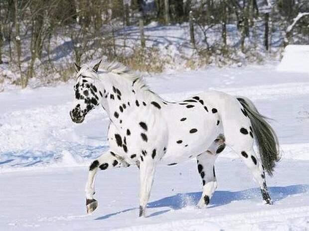 20 самых красивых лошадей в мире, от которых трудно отвести взгляд