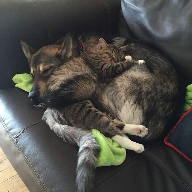 хаски выбрал собственного котенка чтобы забрать его из приюта, хаски по кличке ворон
