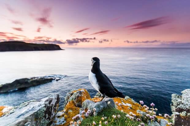 Фотографии птиц от Bird Photographer of the Year 2021