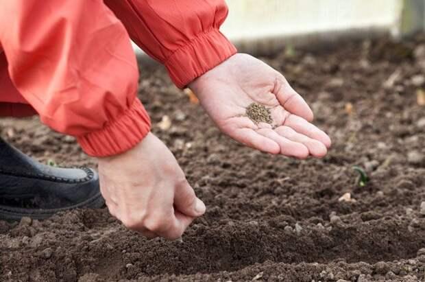 Ароматная зелень и вкусный корень. Первый посев редиса и лука