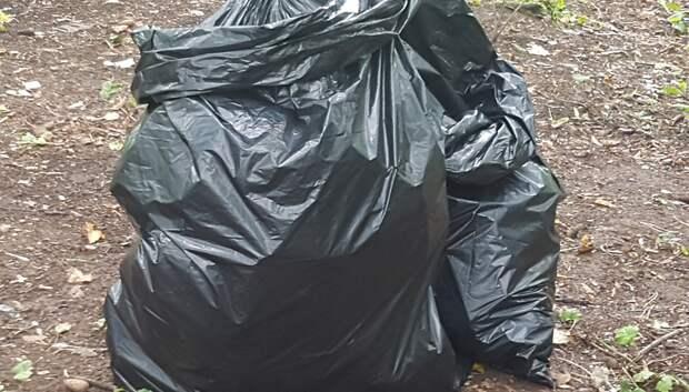 Ввоскресенье подольчан приглашают принять участие в уборке лесного участка
