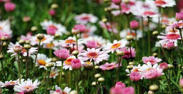 Цветы/ Фото pixabay.com