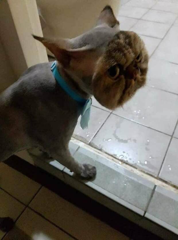 Фото №10 - Зовите психолога: породы собак и кошек с самым сложным характером