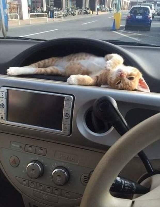 ну или такое вот место в машине игрушки для животных, коты, собаки