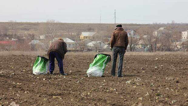Биолог объяснил россиянам, когда лучше всего сеять семена