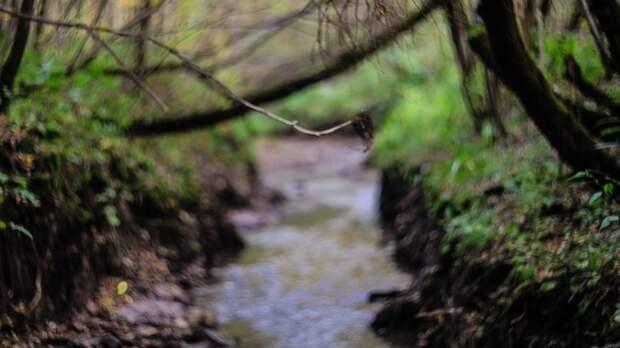 Труп в водорослях и земле нашли в петербургской реке