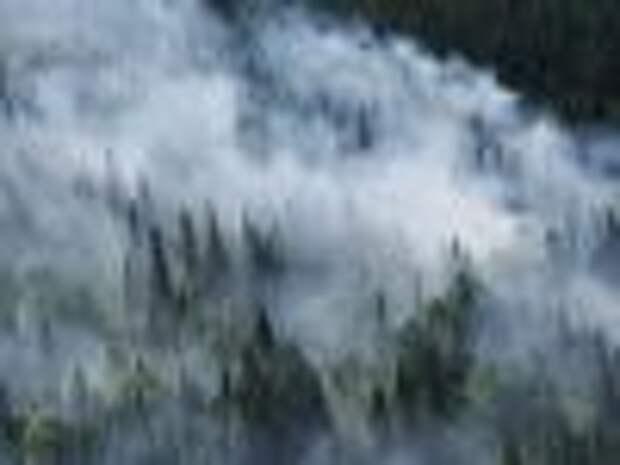 В Сибири площадь лесных пожаров выросла на треть