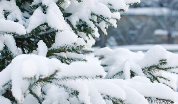 Резкое похолодание доминус 10 градусов ожидается вРостовской области