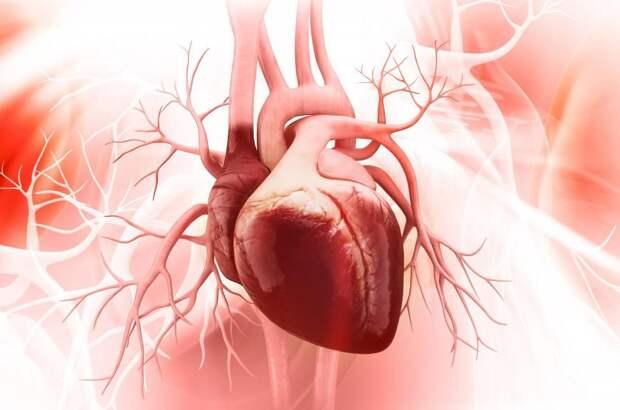 Как самостоятельно проверить здоровье и силу сердца (всего за 5 минут)