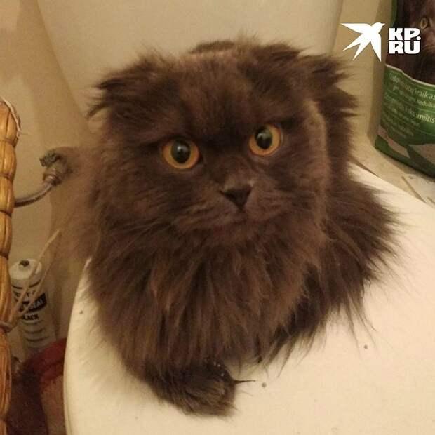 Так котик выглядит сейчас Фото: Из личного архива героя публикации