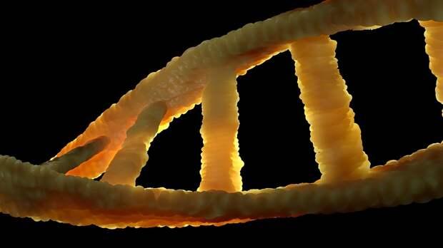 ДНК ископаемого медведя выделили из пещерной почвы
