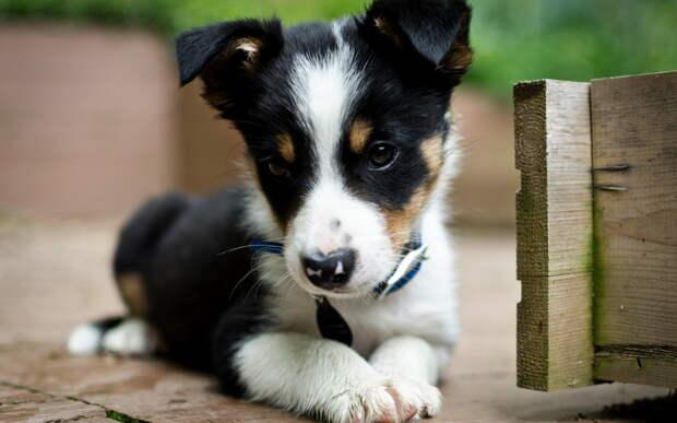 Собаки чаще всего хорошо понимают, что мы говорим