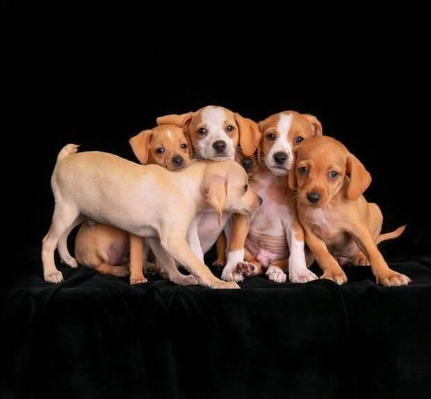 Второе место в категории «Щенки» великобритания, животные, интересное, конкурс, собака, собаки