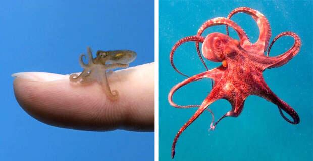 20 детенышей животных, которых вы не узнаете, ведь видели их только взрослыми