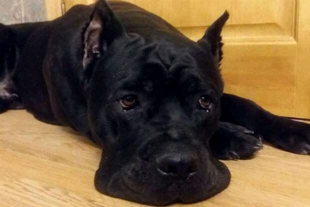 В Петербурге горожане спасли собаку, которую жестоко избил хозяин-живодер