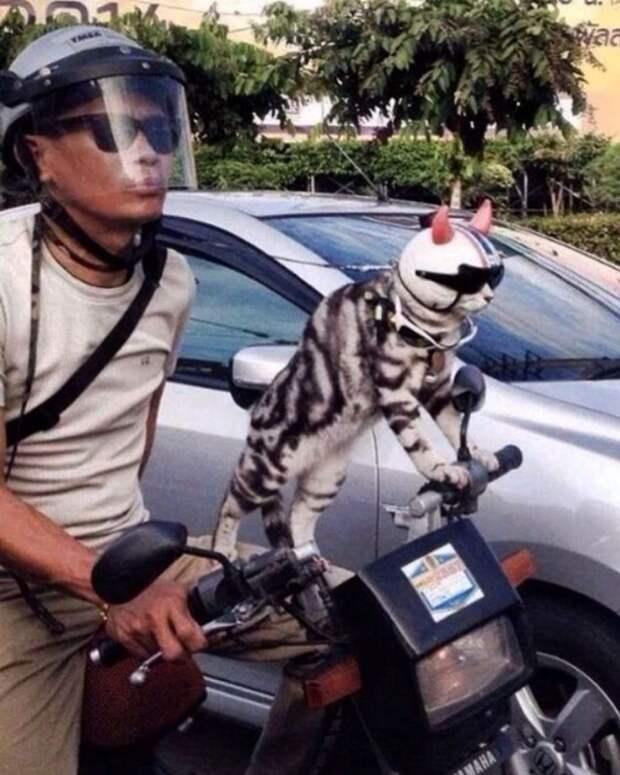 Верхом на собаке и за рулем авто: 10 фото котиков в неожиданных ситуациях
