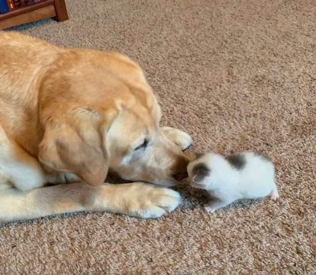 собака с котёнком