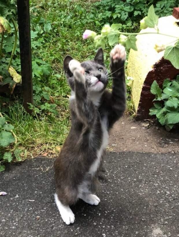Этот ребёнок живёт рядом с парадной, где бьют кошек палками...
