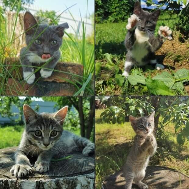 Фото дня: озорные котята с Часовой улицы в ожидании любящих хозяев