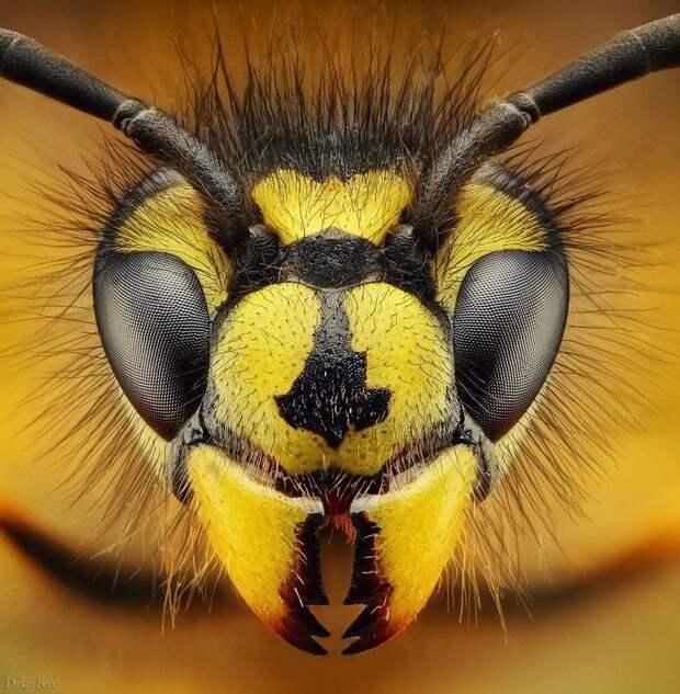 Угрожающие всему сущему осы виды, красиво, лица, насекомые, природа, фото