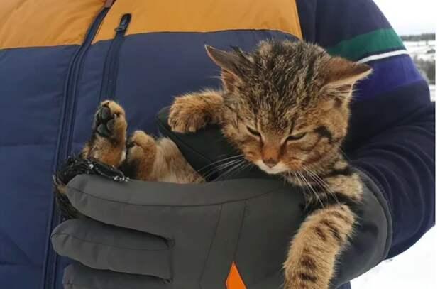 Мужчина пригрел дома замерзшего котенка. А он оказался редким животным
