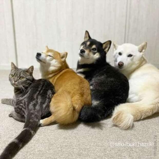Кот, который считает себя собакой