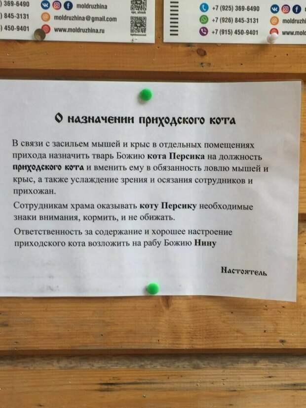 Куда же без кота-то! благочестие, доброта, добрые дела, молитва, православные шутят