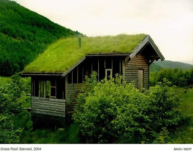 Оживите дом с помощью «зеленой крыши»: фото-идеи и мастер-класс