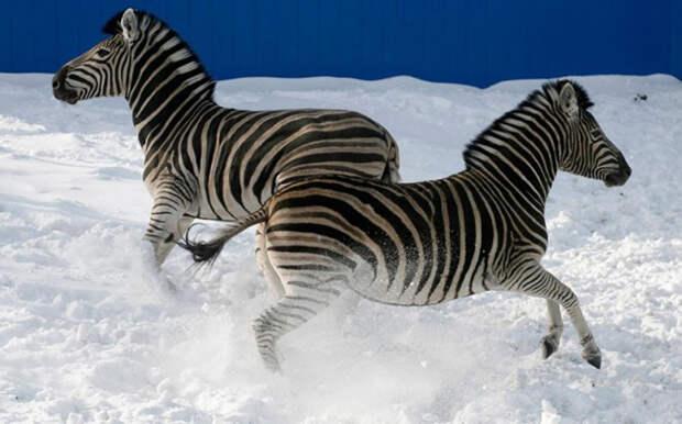Фотографии животных за неделю
