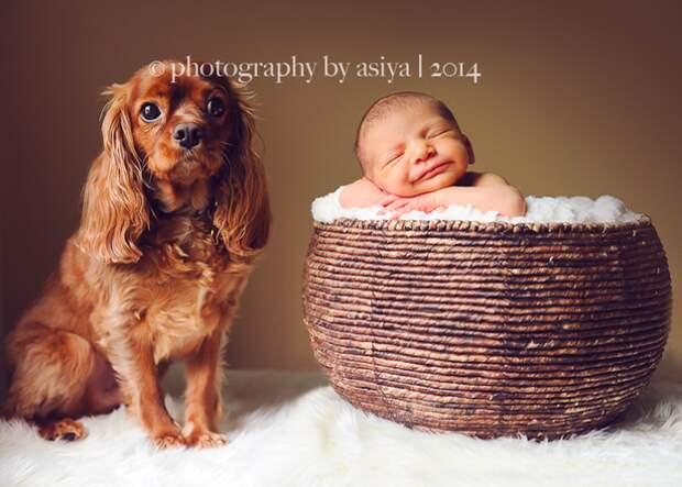младенцы и собаки первая фотосессия (21)