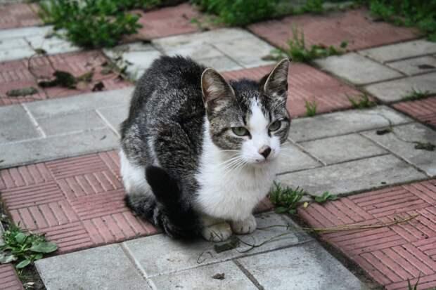 Чей-то выросший котёнок, ставшая теперь ничейной кисой...