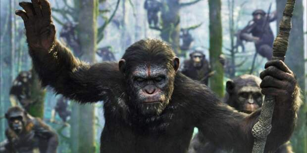 Четырёхлетняя жестокая война обезьян 1970-х годов: что могло быть причиной внезапной вражды?