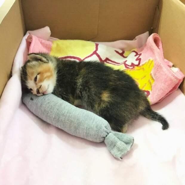 Девушка спасла котенка, лежащего в пыли на улице. А другие проходили мимо