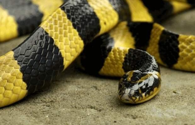 Метровая змея заползла в московскую квартиру