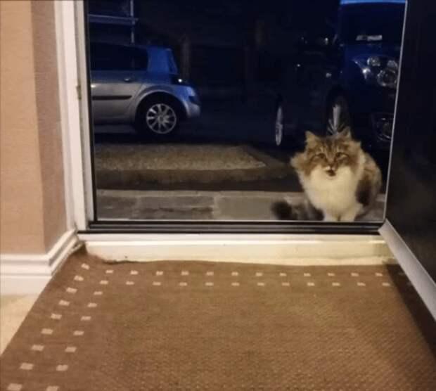 Жалостливый человек впустил к себе кошку, даже не подозревая, к чему это приведет