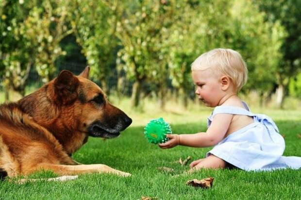 Собаки положительно влияют на детей