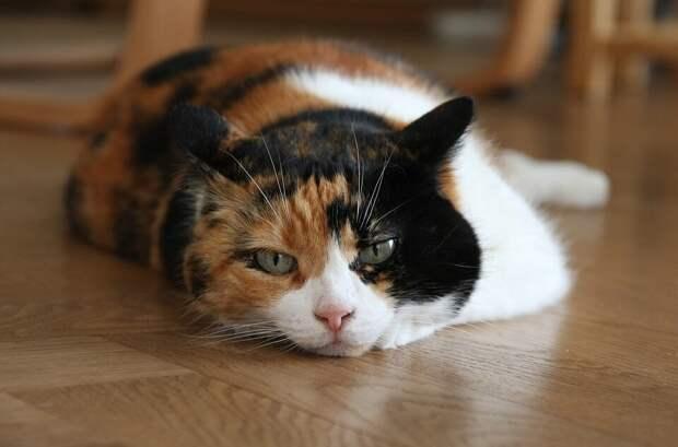 Кошка подложила котят к спящему хозяину — и пошла спать. Рассказываем, как стокилограммовый мужик стал папкой для котят