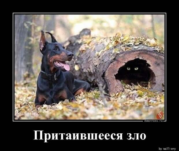 Demotions.ru - ДЕМОТИВАТОРЫ. Создай демотиватор онлайн без регистрации.