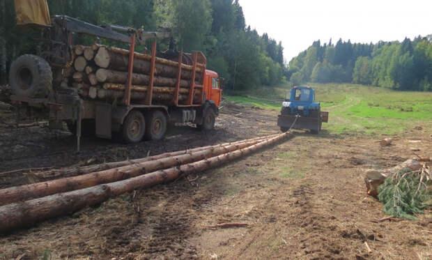 Жителя Удмуртии заподозрили в незаконной рубке деревьев в лесу