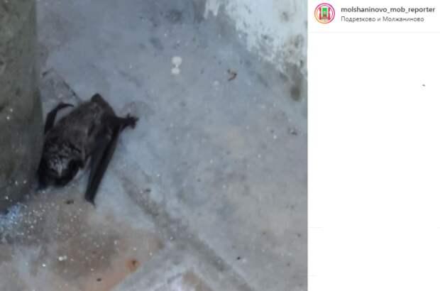 Фото дня: в Молжаниновский залетела летучая мышь