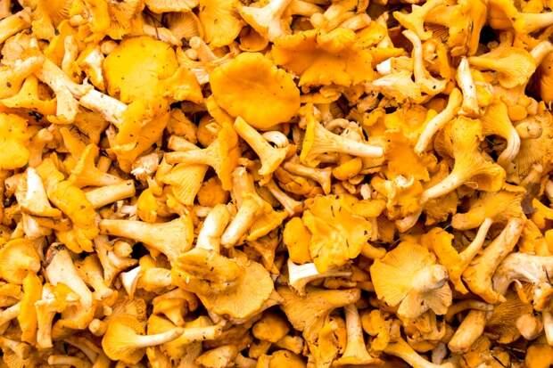 грибы лисички рецепт