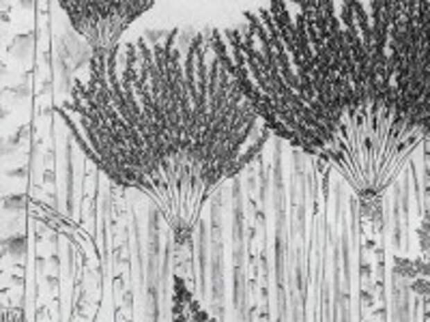 Палеонтологи нашли останки потенциально древнейшего дерева на Земле