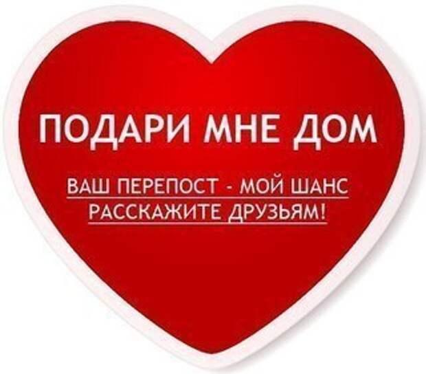 Ласковая красавица ждёт человека, который выбирает друга не глазами, а душой и сердцем!