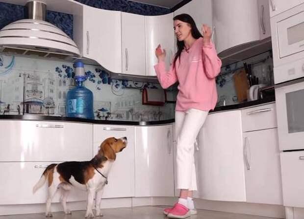 Жительница Одинцова научила своего пса помогать бездомным животным